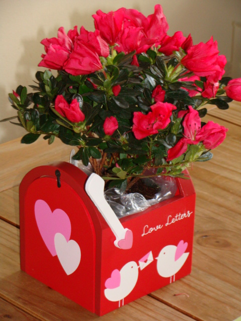 valentine's day flowers and love letters mailbox  i love my kids blog, Beautiful flower