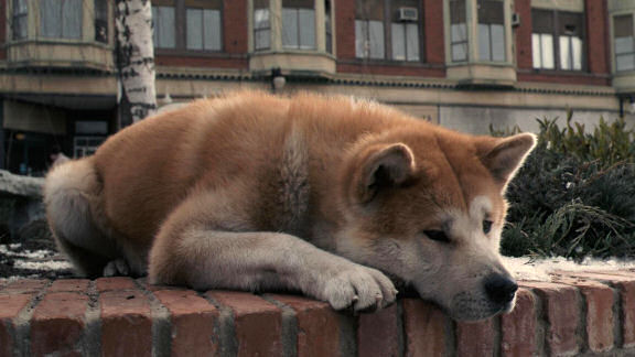 Sad Dog Movies That Make You Cry On Netflix